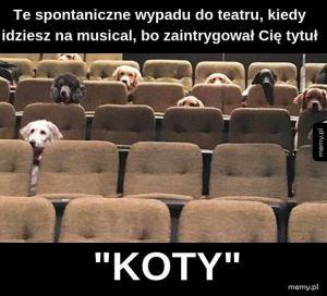 """""""Koty"""""""