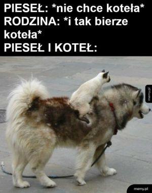 Stary i pies