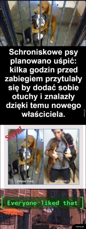 Kochające się piesy