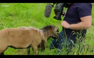 Koza vs kamerzysta