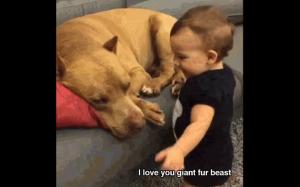 Kocham cię gigantyczna futrzana bestio