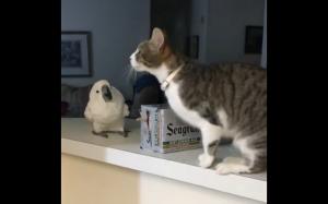 Kot zadziwił papugę