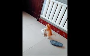 Epicka walka kota i psa