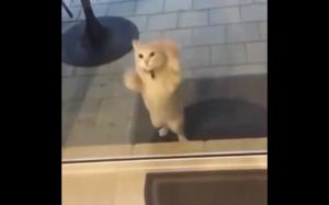No wpuść mnie!!