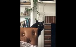 Demoniczny koteł
