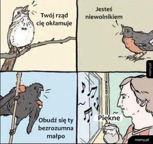 Śpiew ptaków
