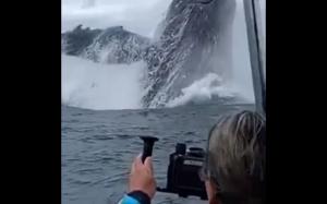 Niesamowity wieloryb