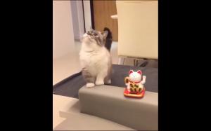 Koteł ma nowego kumpla