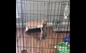 Kocia ucieczka