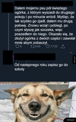 Mądry pies