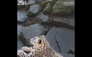 Duże koty to też koty