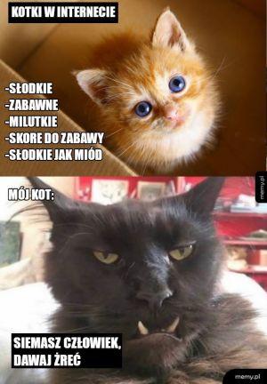 Rodzaje kotów