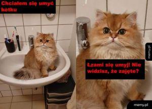Stanowczy kotełek