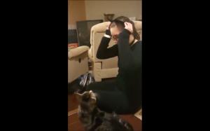 Wystraszony koteł