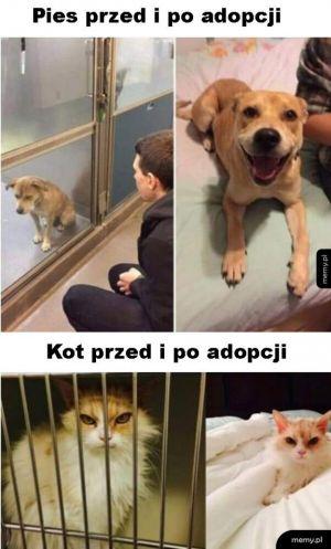 Pies vs kot