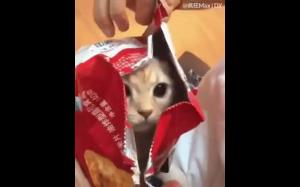 Koty są wszędzie