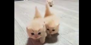 Trzech muszkieterów