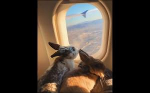 Latające króliczki