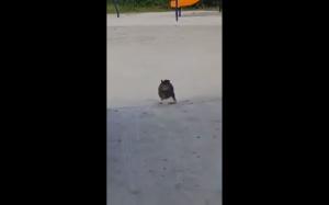 Niezłe przyśpieszenie ma ten koteł