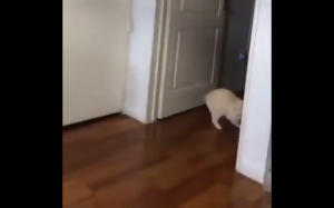 Ulubiona zabawa kota