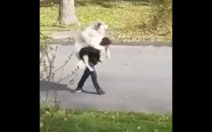 Wielki pies, mały człowiek