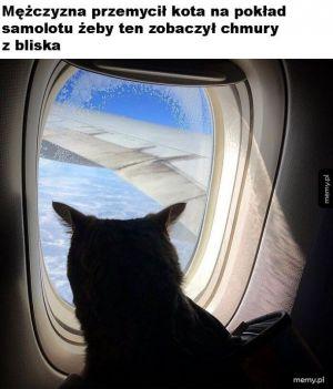 Koteł w samolocie