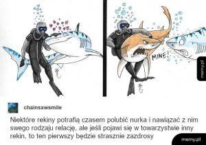 Rekiny chcą być kochane
