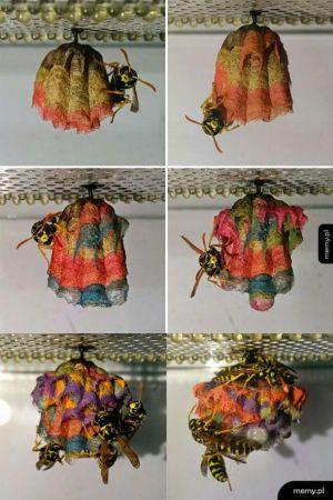 Gdy dasz osom kolorowy papier, zbudują takie gniazda
