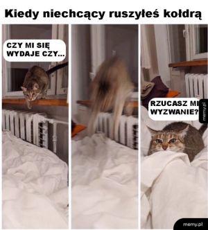 Tak to jest z kotełami