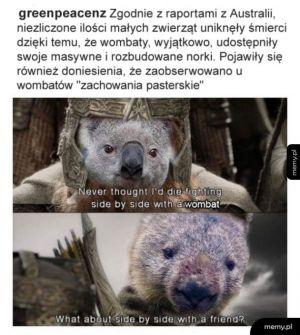 Dlatego kocham wombaty