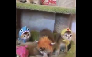 Kotełki w czapkach