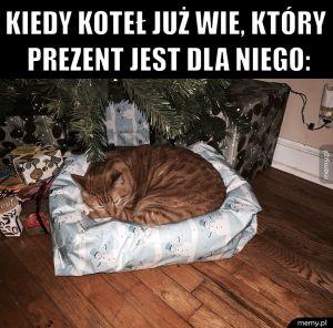Domyślny koteł