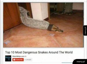Niebezpieczny wąż