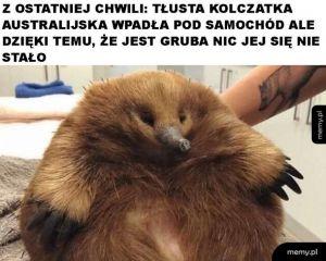 Tłuszczyk uratował