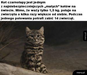 Niebezpieczny koteł