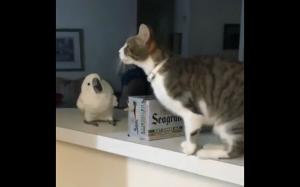 Mina papugi - bezcenna