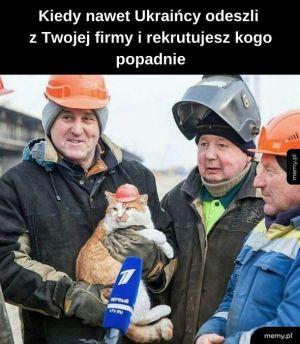 Kot szybciej znajdzie robotę niż madka