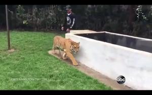 Jak wystraszyć tygrysa