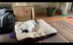 Radość z nowego łóżka