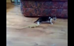 Koty są dziwne