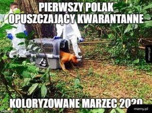 Januszowirus