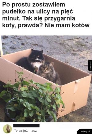 Tak się robią koty