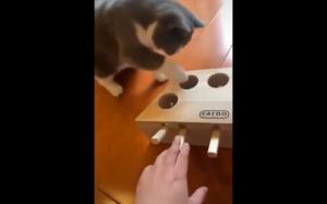 Prank box dla kotów