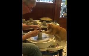 Koteł chciał pomóc