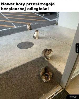 Grzeczne kotki