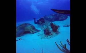 Żółw gigant