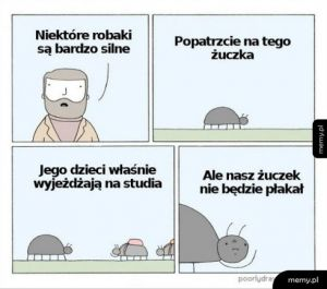 Robaki