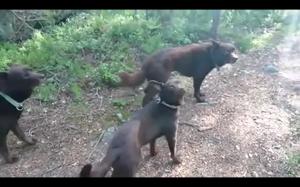 Zamarznięte psy