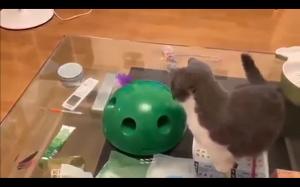 Kocia zabawka