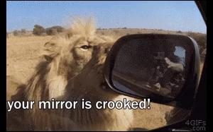 Ten lew wszystko naprawi